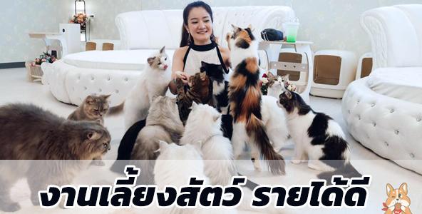 สมัครงานเลี้ยงสัตว์ Kitties & Bears Cafe (หมา-แมว) รายได้ดี