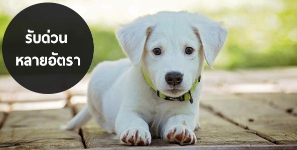 สมัครงานดูแลสุนัข รับพนักงานบริการ ต้อนรับลูกค้า รายได้ดี