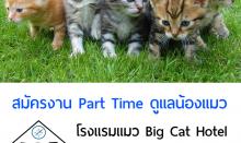 งาน Part Time ดูแลน้องแมว