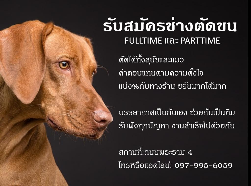 รับสมัครช่างอาบน้ำตัดขน สุนัขและแมว Part Time / Full Time
